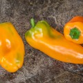 phoca thumb s yummy sweet pepper 23 aout 2017