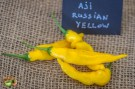 aji_russian_yellow_piment_11 septembre 2016